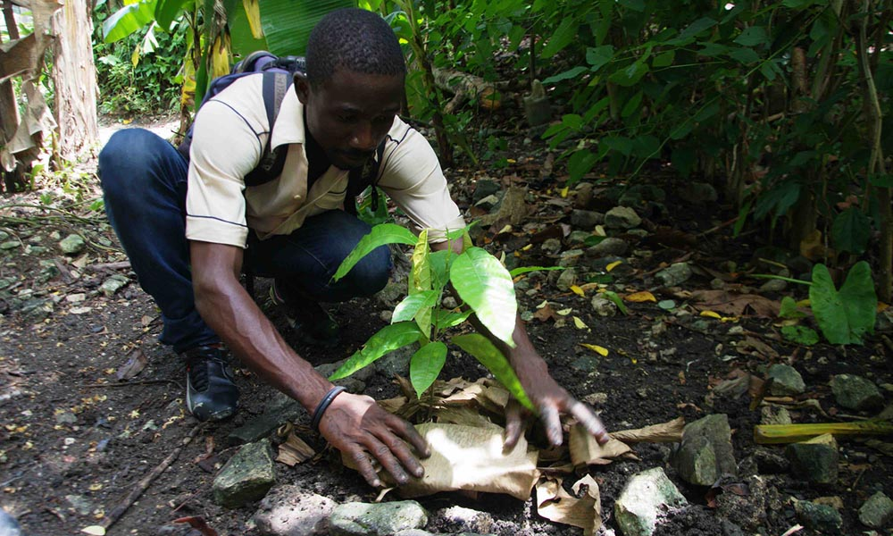 Here you will find pictures of Reforest'Action projects financed by Paul Mitchell in Peru, USA and Haiti