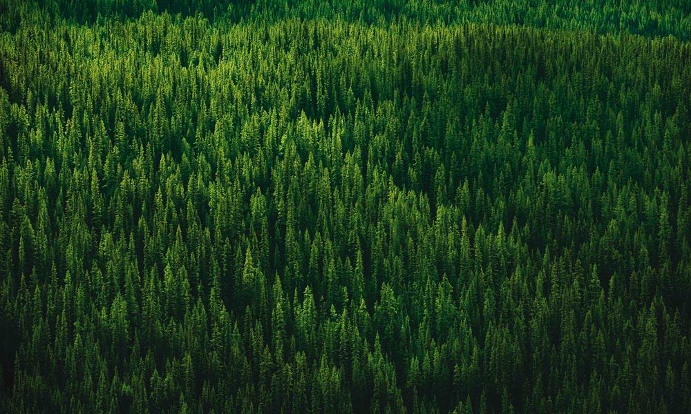 ReforestAction-4
